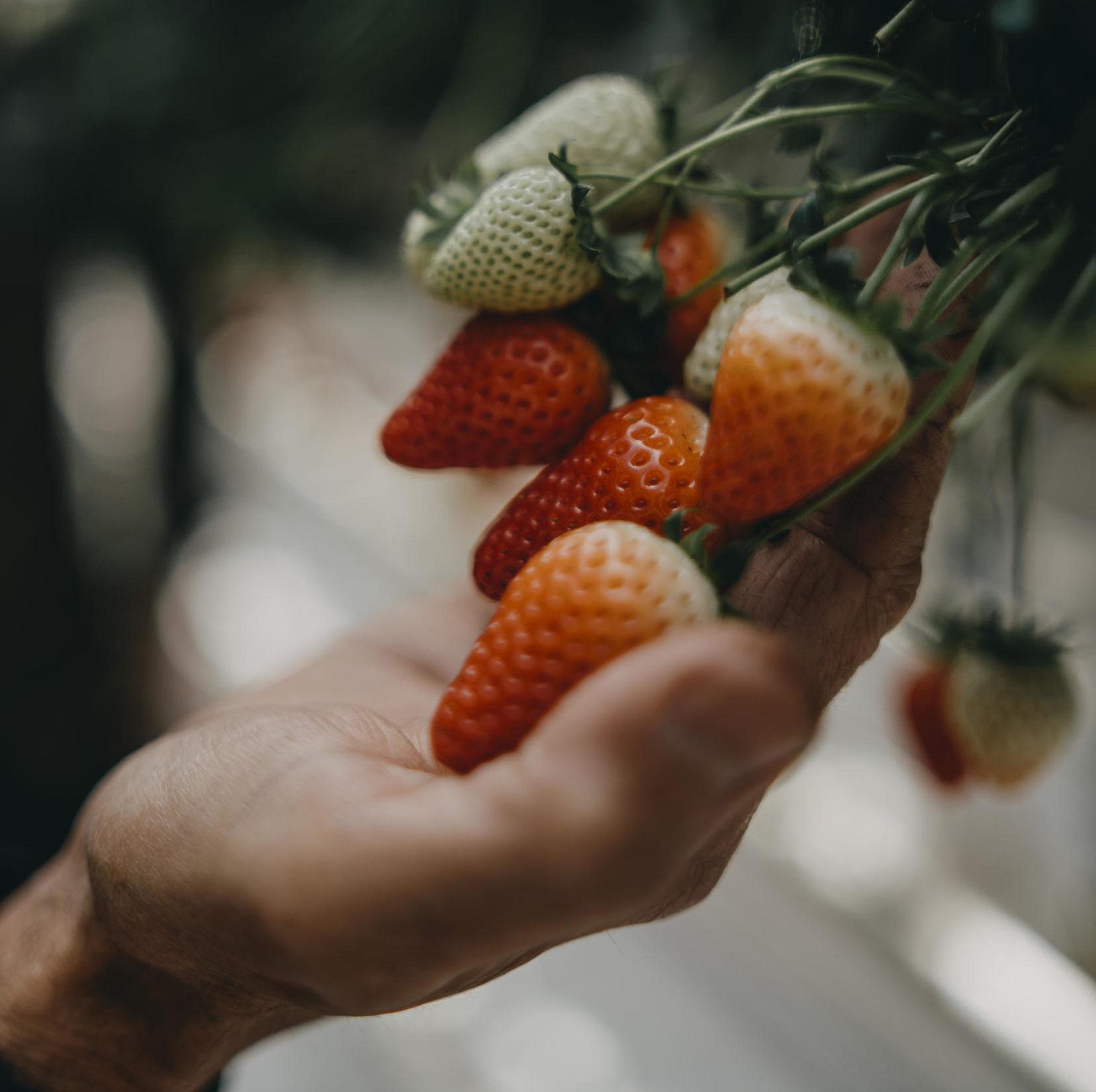 aardbeien in hand